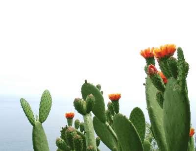 Nopal kaktuszpor és minden, ami vitamin. Természetesen - stilusteremto.hu